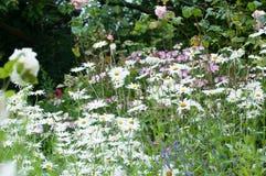 άγρια περιοχές λουλουδιών Στοκ Εικόνα