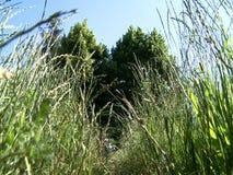 άγρια περιοχές λουλου&de απόθεμα βίντεο