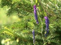 άγρια περιοχές λουλου&de φιλμ μικρού μήκους