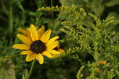 άγρια περιοχές λουλου&de Στοκ εικόνες με δικαίωμα ελεύθερης χρήσης