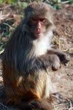 άγρια περιοχές πιθήκων στοκ φωτογραφία με δικαίωμα ελεύθερης χρήσης