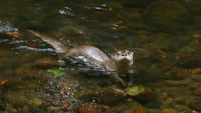 άγρια περιοχές ποταμών εν&upsilo απόθεμα βίντεο