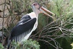 άγρια περιοχές πουλιών Στοκ Εικόνες
