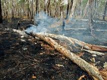 άγρια περιοχές πυρκαγιάς θάμνων Στοκ Εικόνες