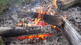 άγρια περιοχές πυρκαγιάς απόθεμα βίντεο