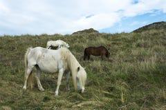 άγρια περιοχές πόνι στοκ φωτογραφίες με δικαίωμα ελεύθερης χρήσης
