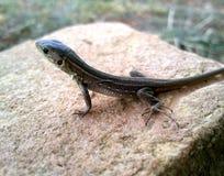 άγρια περιοχές σαυρών ενυδρείων ζώων Στοκ φωτογραφία με δικαίωμα ελεύθερης χρήσης
