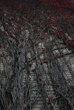 άγρια περιοχές σταφυλιών στοκ φωτογραφία