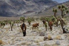 άγρια περιοχές της Νεβάδα&s στοκ εικόνες με δικαίωμα ελεύθερης χρήσης