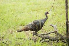 άγρια περιοχές της Τουρκί στοκ εικόνα με δικαίωμα ελεύθερης χρήσης