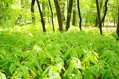 άγρια περιοχές φυτών Στοκ Εικόνες