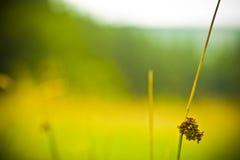 άγρια περιοχές φυτών Στοκ Φωτογραφίες
