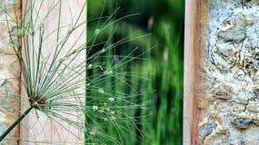 άγρια περιοχές φυτών στοκ φωτογραφίες με δικαίωμα ελεύθερης χρήσης