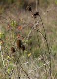 άγρια περιοχές φυτών στοκ εικόνα