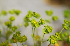 άγρια περιοχές φυτών Στοκ εικόνα με δικαίωμα ελεύθερης χρήσης
