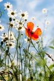 άγρια περιοχές φύσης λουλουδιών Στοκ Εικόνες