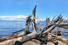 άγρια περιοχές φύσης Στοκ φωτογραφίες με δικαίωμα ελεύθερης χρήσης