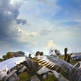άγρια περιοχές χήνων Στοκ Εικόνα
