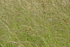 άγρια περιοχές χλόης ανασ&k Στοκ εικόνα με δικαίωμα ελεύθερης χρήσης