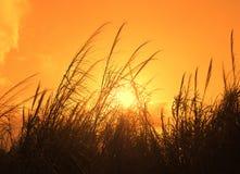 άγρια περιοχές χλόης στοκ εικόνα με δικαίωμα ελεύθερης χρήσης