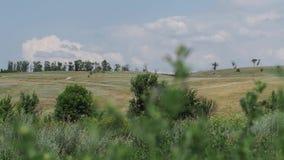 άγρια περιοχές χορταριών &lambda φιλμ μικρού μήκους