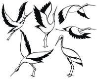 Άγρια πουλιά Πελαργός που τίθεται στο λευκό Διανυσματική απεικόνιση πελαργών δερματοστιξιών διανυσματική απεικόνιση