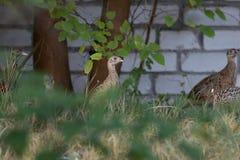Άγρια πουλιά στην πόλη Στοκ εικόνες με δικαίωμα ελεύθερης χρήσης