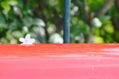 Άγρια πτώση λουλουδιών δαμάσκηνων νερού στο κόκκινο ταχυδρομικό κουτί Στοκ φωτογραφίες με δικαίωμα ελεύθερης χρήσης