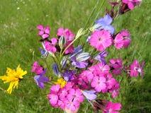 Άγρια ρόδινα λουλούδια Στοκ Εικόνες