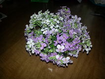 Άγρια ρύθμιση λουλουδιών στοκ φωτογραφία με δικαίωμα ελεύθερης χρήσης