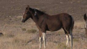 Άγρια φοράδα και Foal αλόγων απόθεμα βίντεο