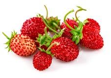 Άγρια φράουλα μούρων με την πράσινη χούφτα φύλλων Στοκ Εικόνες