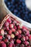 Άγρια φράουλα Στοκ φωτογραφία με δικαίωμα ελεύθερης χρήσης