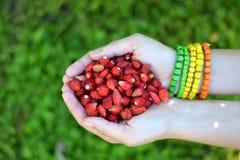 Άγρια φράουλα Στοκ φωτογραφίες με δικαίωμα ελεύθερης χρήσης