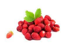 Άγρια φράουλα Στοκ εικόνες με δικαίωμα ελεύθερης χρήσης
