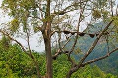 Άγρια φωλιά μελισσών στο δέντρο στοκ εικόνες