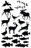 άγρια φύση απεικόνισης Στοκ Εικόνες