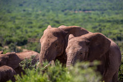 Άγρια φύση στη Νότια Αφρική Στοκ φωτογραφία με δικαίωμα ελεύθερης χρήσης