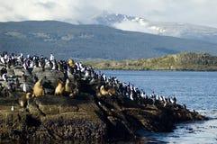 άγρια φύση της Αργεντινής Στοκ Φωτογραφίες