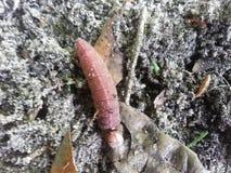 άγρια φύση της Φλώριδας Στοκ Εικόνα