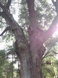 άγρια φύση της Φλώριδας Στοκ εικόνες με δικαίωμα ελεύθερης χρήσης