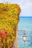 Άγρια φύλλα αμπέλων σε έναν τοίχο με έναν λαμπτήρα Στοκ εικόνα με δικαίωμα ελεύθερης χρήσης