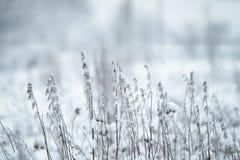 Άγρια χλόη που παγώνει και που καλύπτεται με το χιόνι Στοκ εικόνα με δικαίωμα ελεύθερης χρήσης