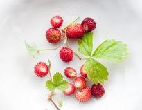 Άγρια strawbwerries Στοκ φωτογραφίες με δικαίωμα ελεύθερης χρήσης