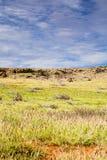 Άγριες αίγες που περιπλανώνται την πλευρική έρημο της Αυστραλίας σε Ningaloo Στοκ Εικόνα