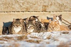 Άγριες γάτες Στοκ Εικόνα