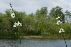 άγριες λουλούδια και εγκαταστάσεις ελών Στοκ φωτογραφία με δικαίωμα ελεύθερης χρήσης