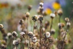 Άγριες ξηρές χλόες φθινοπώρου, φυσικό τοπίο φθινοπώρου στοκ φωτογραφίες