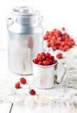 Άγριες φράουλες Στοκ εικόνα με δικαίωμα ελεύθερης χρήσης