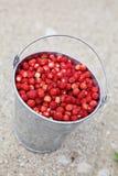 Άγριες φράουλες στοκ φωτογραφίες